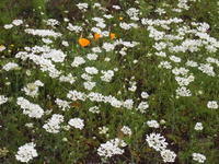 お花の綺麗な季節になりました - 八ヶ岳 革 ときどき くるみ