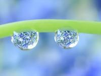 水滴写真 - ピンクッション