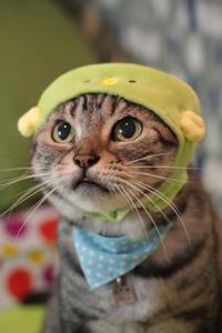 海の生き物にゃ! - 愛しき猫にゃん♪