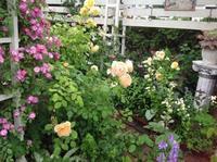 OPENGardenのお知らせ - 薔薇に魅せられて
