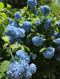 明月院ブルー - piecing・針仕事と庭仕事の日々
