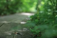 no‐mindedness - Aruku