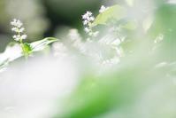 今日のふわラー #354 - ainosatoブログ02