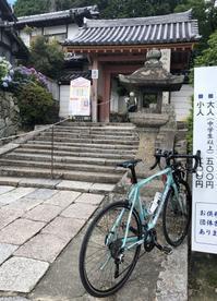 矢田寺のアジサイ - さすらいのバーブ坂田「笑わせるなよ泣けるじゃないか2」