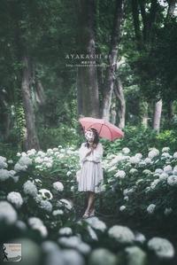 ayakashi #6 - 箱庭の休日