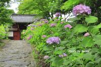 2018 紫陽花遠征~幸田町~ - さんたの富士山と癒しの射心館