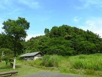 ネムノキの花、コウゾの実 - 千葉県いすみ環境と文化のさとセンター