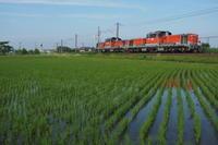 2018初夏の関西本線〜DD51撮影 - 8001列車の旅と撮影記録