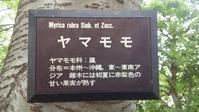 飯田橋のヤマモモ - SEのための心理相談室