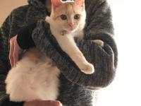 もかちゃん、正式譲渡になりました - ☆保護猫*ときどき*うち猫☆