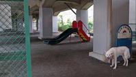 Vol.1349 本山前子供の遊び場 - 小太郎の白っぽい世界