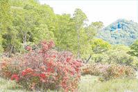 赤城山・白樺牧場のレンゲツツジ 2 - 光 塗人 の デジタル フォト グラフィック アート (DIGITAL PHOTOGRAPHIC ARTWORKS)