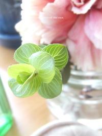 green in my room -  小さじいっぱいのたいよう