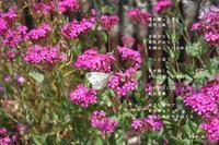 追い風 - 花の咲み、花のうた、きらめく地上 ―― photo&poem gallery kanon