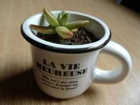 多肉植物は鉢にこだわります - スポック艦長のPhoto Diary