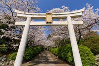 桜咲く京都2018 ソメイヨシノ咲く宗忠神社 - 花景色-K.W.C. PhotoBlog