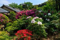 牡丹とツツジの千佛院(當麻寺塔頭) - 花景色-K.W.C. PhotoBlog