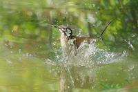 近距離で撮影した一番子の飛び出し - 近隣の野鳥を探して
