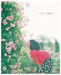 Film #薔薇にKiss ♡ - ココロハレ*