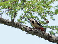 アカゲラもいた奥日光 - コーヒー党の野鳥と自然 パート2