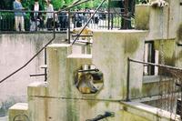 京都市動物園 - photoな日々