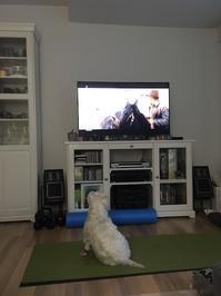 テレビを観る犬 - フィンランドでも筆無精