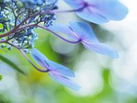 空を見上げ、光を透して - fukko-san*  blog