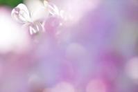 今日のふわラー #355 - ainosatoブログ02