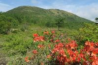 レンゲツツジの花咲く湯の丸山~烏帽子岳 - ヤッホー!今日はどちらへ?