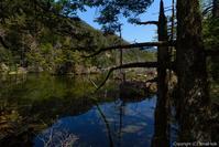 岩魚の棲む谷 - ひつじ雲日記