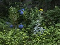 夕暮れ時の花 - 庭日和