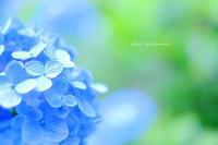明月院ブルー - Photographie de la couleur