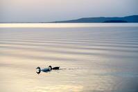 差出人のない手紙、湖の不思議なつがいと宿泊割引 - イタリア写真草子 Fotoblog da Perugia
