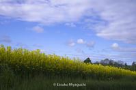 空と雲と菜の花畑 - ekkoの --- four seasons --- 北海道