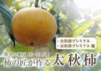 太秋柿古川果樹園平成30年度の着果後の様子と本物と呼べる逸品を作り上げるための惜しまぬ手間ひま - FLCパートナーズストア