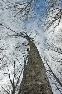 ブナの森へ - 空ヤ畑ノコトバカリ