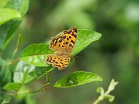 副産物の蝶 - 風任せ自由人