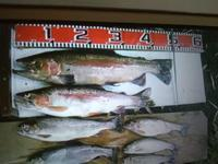 渓流釣り3回目 - 一二の日記