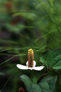6.24 - anemone