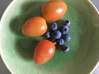 ブルーベリーの初収穫とアイコ、そしてトラ。 - いととはり