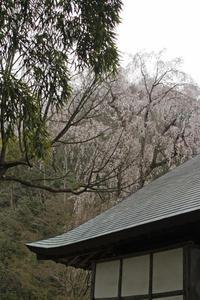 八王子番外編枝垂れ桜の浄副寺 - 建築三昧