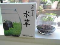 水草を育てよう! -  自画自賛の庭(*^_^*)からの~ ベランダばんざ~い!