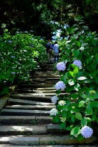 紫陽花の咲く寺へ - お散歩気分で♪