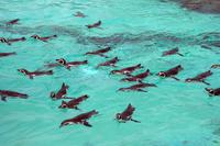 フンボルトペンギンとフェアリーペンギン - 動物園放浪記