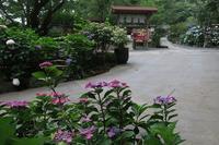 初夏の三浦アルプスを歩くその4 - 季節(いま)を求めて