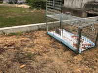 ジュニが生まれた場所に捕獲器を設置しました - ☆保護猫*ときどき*うち猫☆