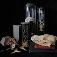 液浸標本 - フランスアンティーク雑貨・家具のSibora BLOG
