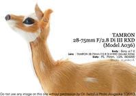 軽いけどちと迷うけど旅に便利かもねなタムロン フルサイズ初のEマウント TAMRON 28-75mm F/2.8 Di III RXD (Model A036) + sony α7III 生徒さま実写 - 東京女子フォトレッスンサロン『ラ・フォト自由が丘』-写真とフォントとデザインと現像と-