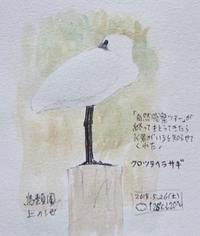 #ネイチャー・ジャーナル #Naturejournal 2018.5.26(土)曇@鳥類園 - スケッチ感察ノート (Nature journal)