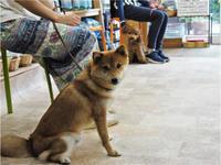 犬のしつけ方教室6/14 - SUPER DOGS blog
